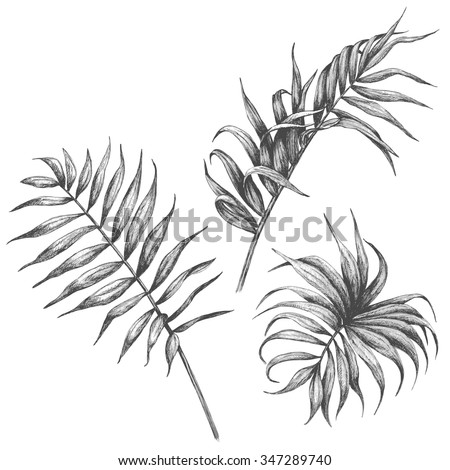 Hand drawn branches and leaves of tropical plants.  Palm fronds isolated on white background.