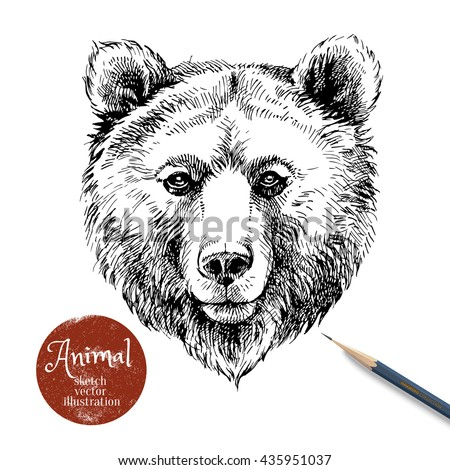 Hand drawn brown bear animal vector illustration. Sketch isolated bear portrait on white background with pencil and label banner