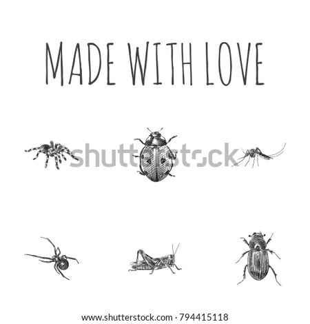 Hand Drawn Bug Sketches Set. Collection Of Black Widow, Gnat, Mantis And Other Sketch Elements. #794415118