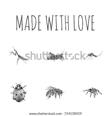 Hand Drawn Bug Sketches Set. Collection Of Sting, Spider, Gnat And Other Sketch Elements. #724538929