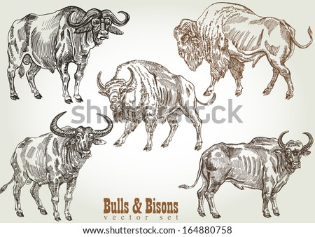 hand drawn bull   bison vector...