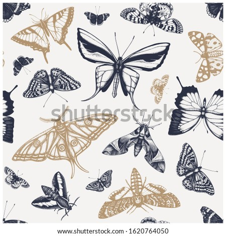 Hand drawn butterflies seamless pattern. High detailed insects backdrop in vintage style. Engraved butterflies background. Entomological illustration with insects outlines.  stock photo