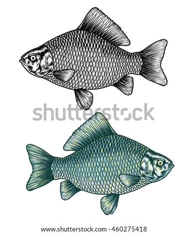 hand drawn carp fish vector