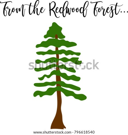 hand drawn cartoon redwood tree