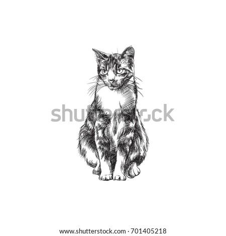 hand drawn cat sketch symbol