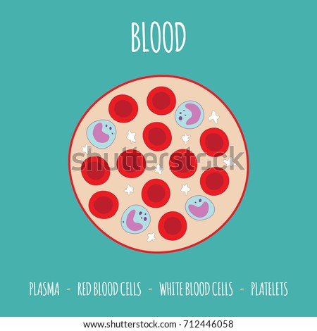 Hand drawn cells of the blood - plasma - red blood cells - white blood cells - platelets