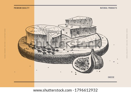 Hand-drawn cheeses and Fig slices on the cutting board. Camembert, Gouda on a light background. Retro image for a menu of restaurants, markets, and shops. Vector illustration in style of engraving.
