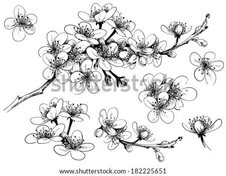 hand drawn cherry blossom