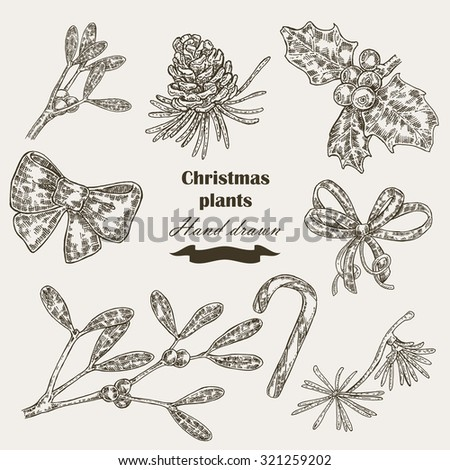 Hand drawn Christmas plants mistletoe and holly. Christmas design element in sketch style. Vector illustration