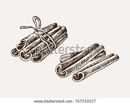 hand drawn cinnamon sticks vector illustration