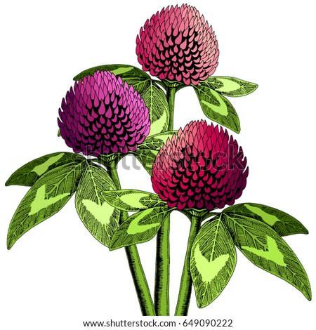 hand drawn clover flower set in
