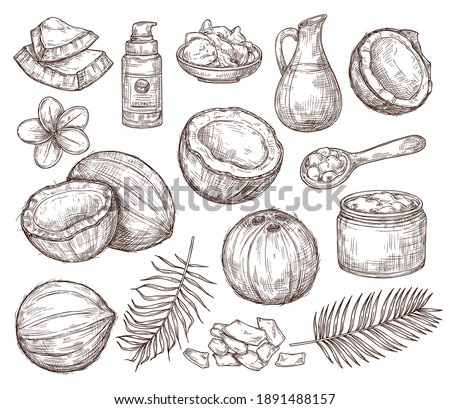 Hand drawn coconut. Summer sketch, beach palm exotic flowers. Organic raw coco oil and cosmetics, drawing tropical leaves exact vector set. Illustration coconut and summer exotic fruit Foto stock ©