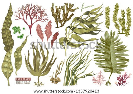 Hand drawn colorful edible algae set. 13 different plants. Vector illustration
