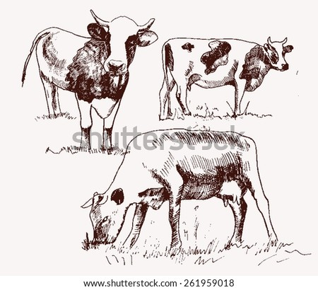cattle in farm hand drawn vector illustration download free vector