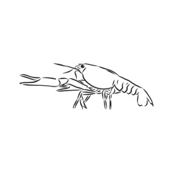 Hand drawn crayfish cancer with simple decor on white isolated background. River animal. cancer animal, vector sketch illustration