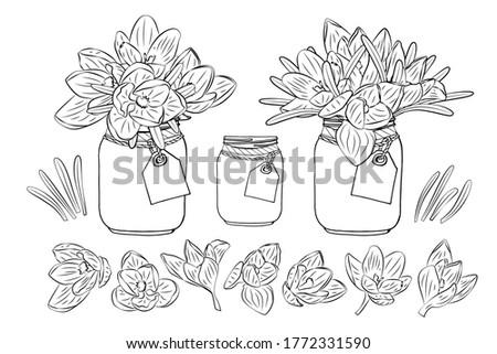 hand drawn crocus flowers in