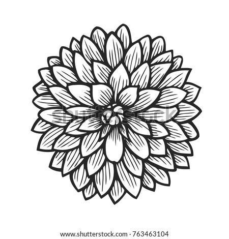 Hand drawn flower element of decor vector flower ez canvas mightylinksfo