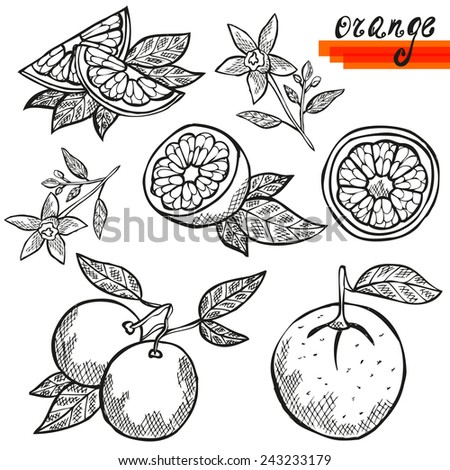 hand drawn decorative orange