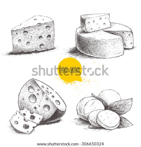 Hand drawn different type of cheese set. Edam, mozzarella cheese with basil leafs, round cheese head, triangle of cheese. Vector organic food illustration. Vintage design.