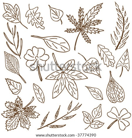 Hand-drawn doodle collection of leaves and plants.