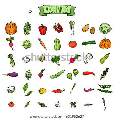 Hand drawn doodle vegetables icons set Vector illustration seasonal veggies symbols collection Cartoon different kinds of vegetables Various types on white background Sketchy style