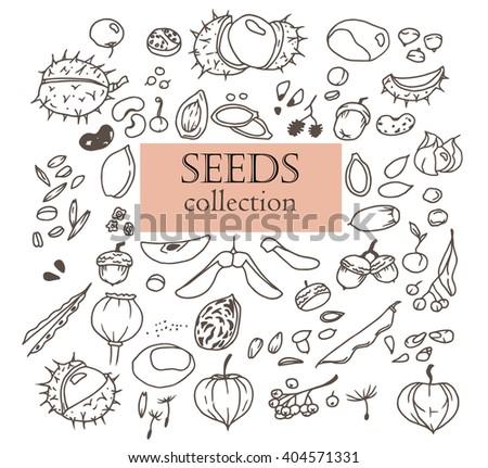 Hand-drawn doodles of the different seeds: chestnut, linden, poppy, pea, oak, pumpkin, bean, apple, beet  etc. Line art illustrations.