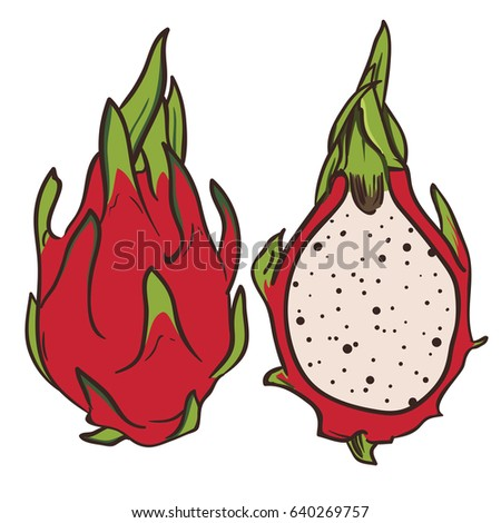 hand drawn dragon fruit