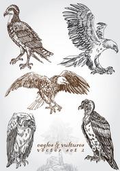 hand drawn eagles & vultures vector set