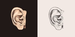 Hand Drawn Ear Sketch Symbol. Vector Listen Element In Trendy Style.