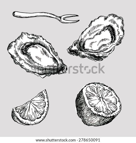 eastern oyster drawing - photo #24