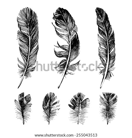 Shutterstock Hand drawn feathers set on white background