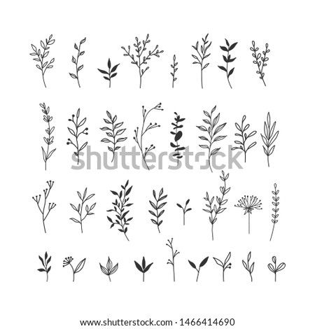 Hand drawn floral illustrations collection on white background Foto d'archivio ©