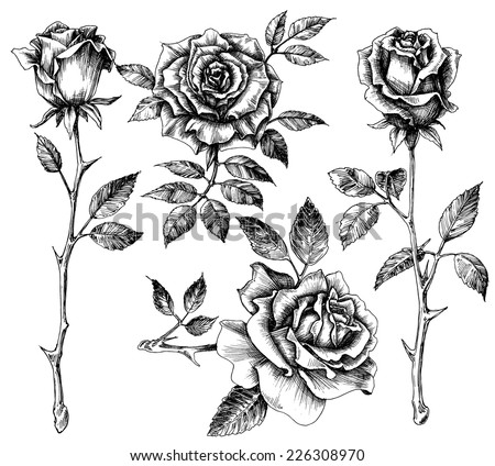 hand drawn flower set  rose