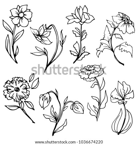 Hand drawn flowers with leaves and stems. Black and white botanical illustration. Vector line art.