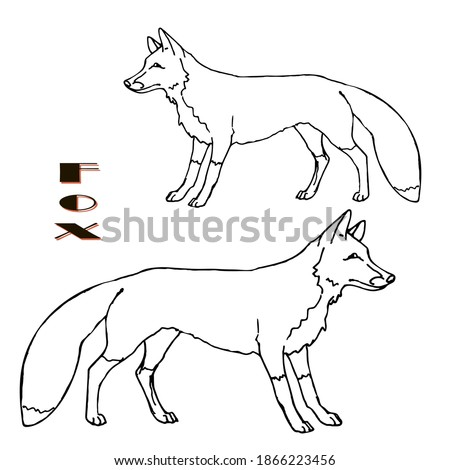 hand-drawn Fox, two isolated images, linear on white background