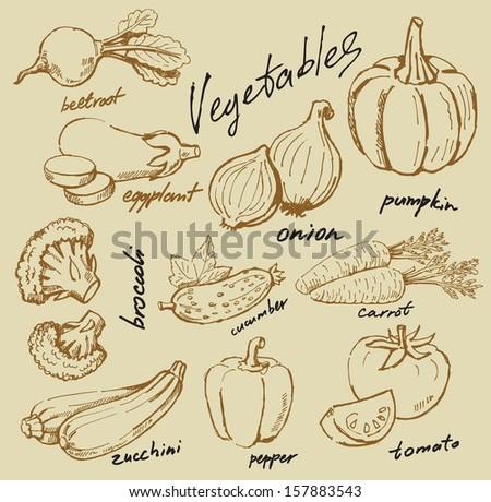 hand drawn fresh vegetables on beige #157883543