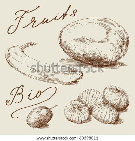 hand drawn fruits - stock vector