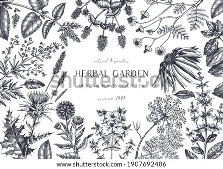 Hand drawn herbal plants banner. Decorative background with vintage medicinal plants, flowers, herbs. For perfumery, cosmetics, tea ingredients. Herbal medicine design template. Aromatic plants flyer.