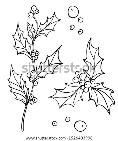 Hand drawn holly branch with holly berries . Traditional New year and Christmas decoration. Black and white ink line art.