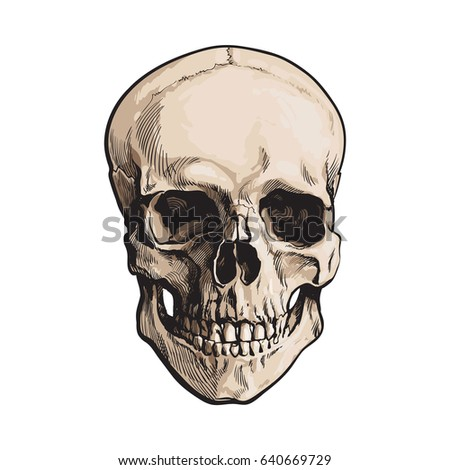 hand drawn human skull