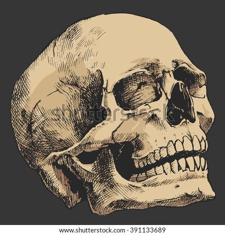 hand drawn human skull  sketchy