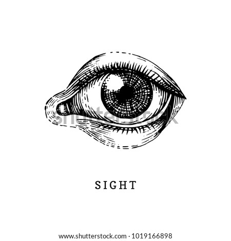Hand drawn icon of human Sight sense in engraved style. Vector illustration of man's Eye.