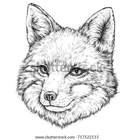Hand Drawn illustration of FOX. Vector illustration