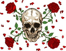 Hand drawn illustration of red roses and skull with falling petals in tattoo style design.