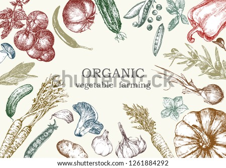 Hand-drawn illustration of vegetables, vector