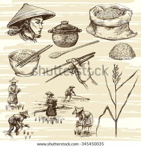 hand drawn illustration  rice