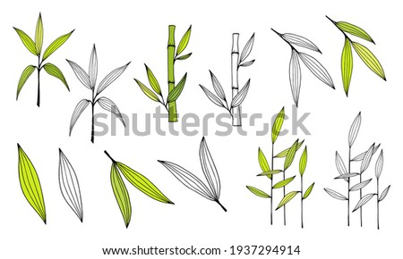 Hand drawn illustration with bamboo stem and leaves. Set of bamboo tree leaves. Hand drawn botanical collection. Drawing of parts of bamboo and sections of branches and leaves on a white background.