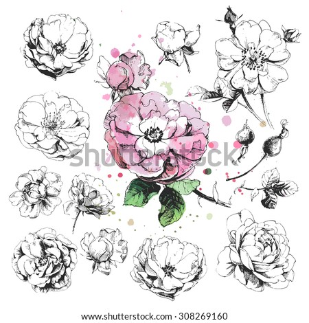 Hand drawn illustrations of wild rose flowers isolated on white background #308269160