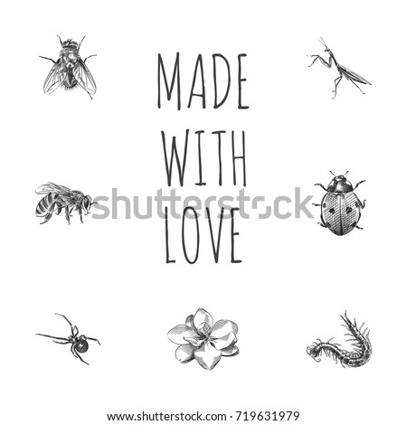 hand drawn insects sketches set