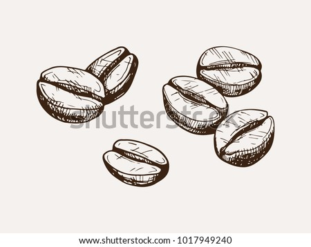 hand drawn isolated coffee beans